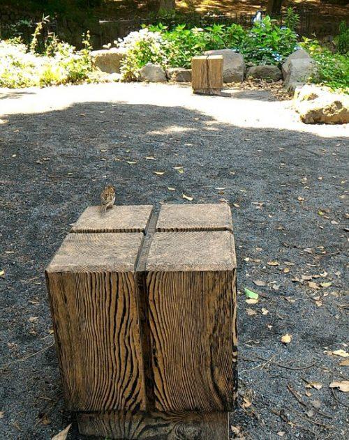 木製の正方形のベンチの上に佇むスズメ